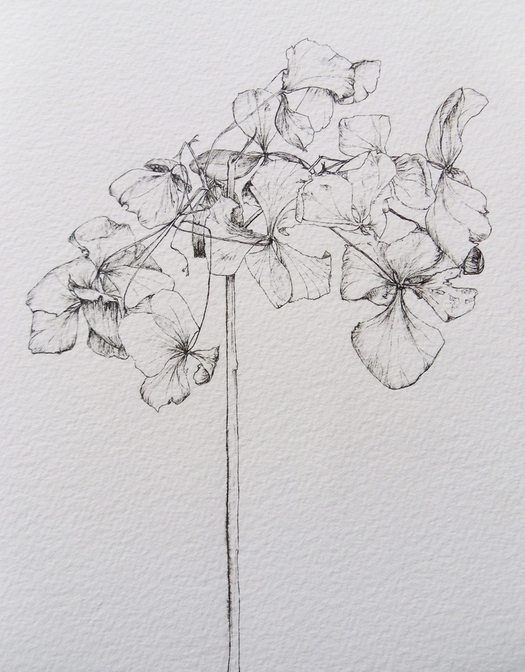 Delicate fine-liner drawing by @Holly Wilcox
