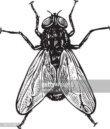 19 best des insectes et moi images on pinterest beetles for Enemy tattoo everett