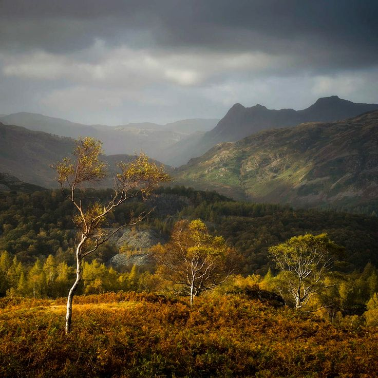 ***A view of the Langdale Pikes from Holme Fell (Lake District, England) by Mark Littlejohn c.