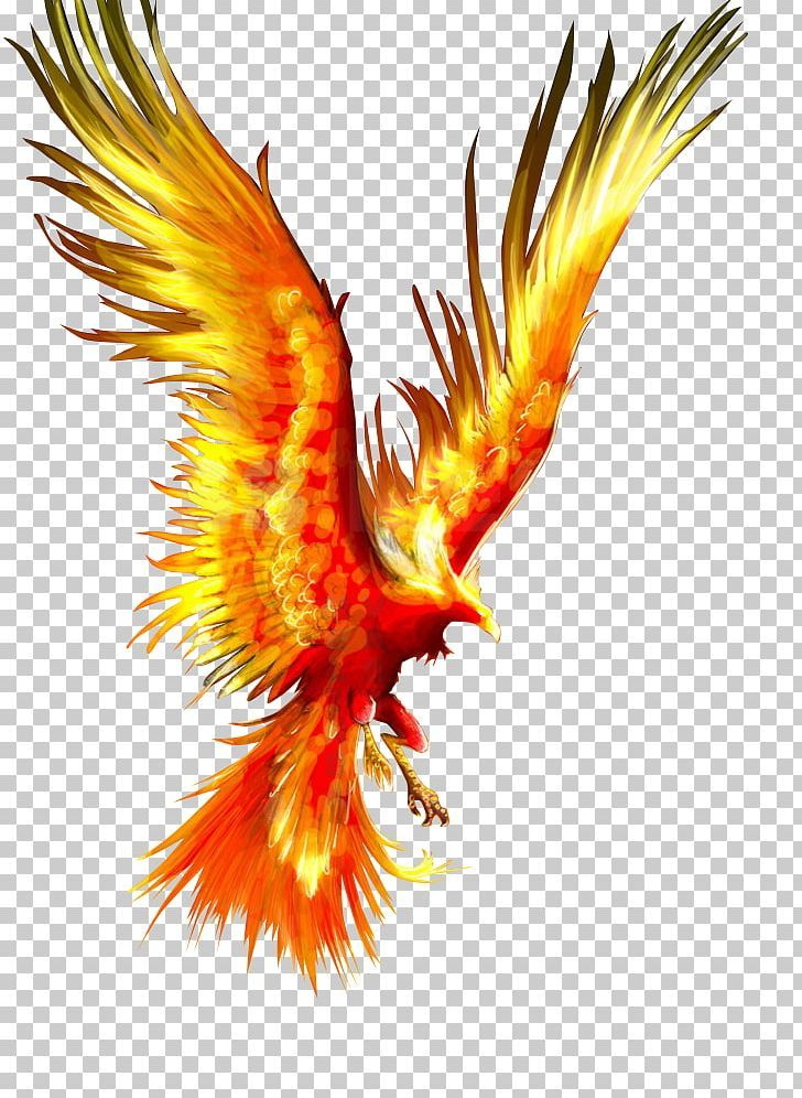 Phoenix Firebird Tattoo Mythology Png Phoenix Bird Phoenix Bird Art Phoenix Drawing