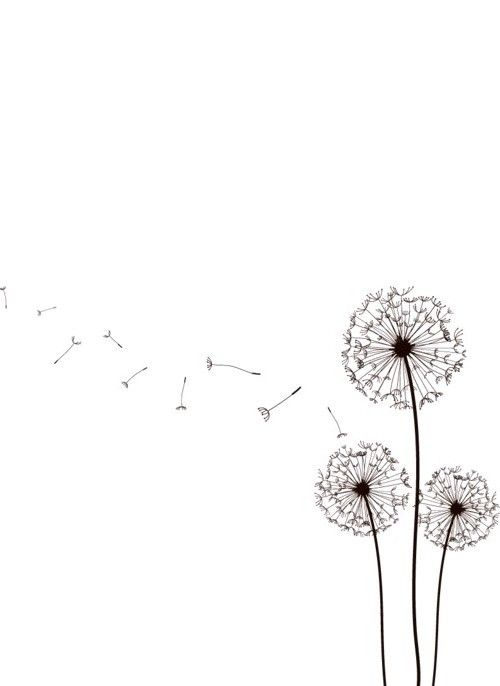 1000 id es sur le th me dessin de pissenlit sur pinterest - Dessin fleur pissenlit ...
