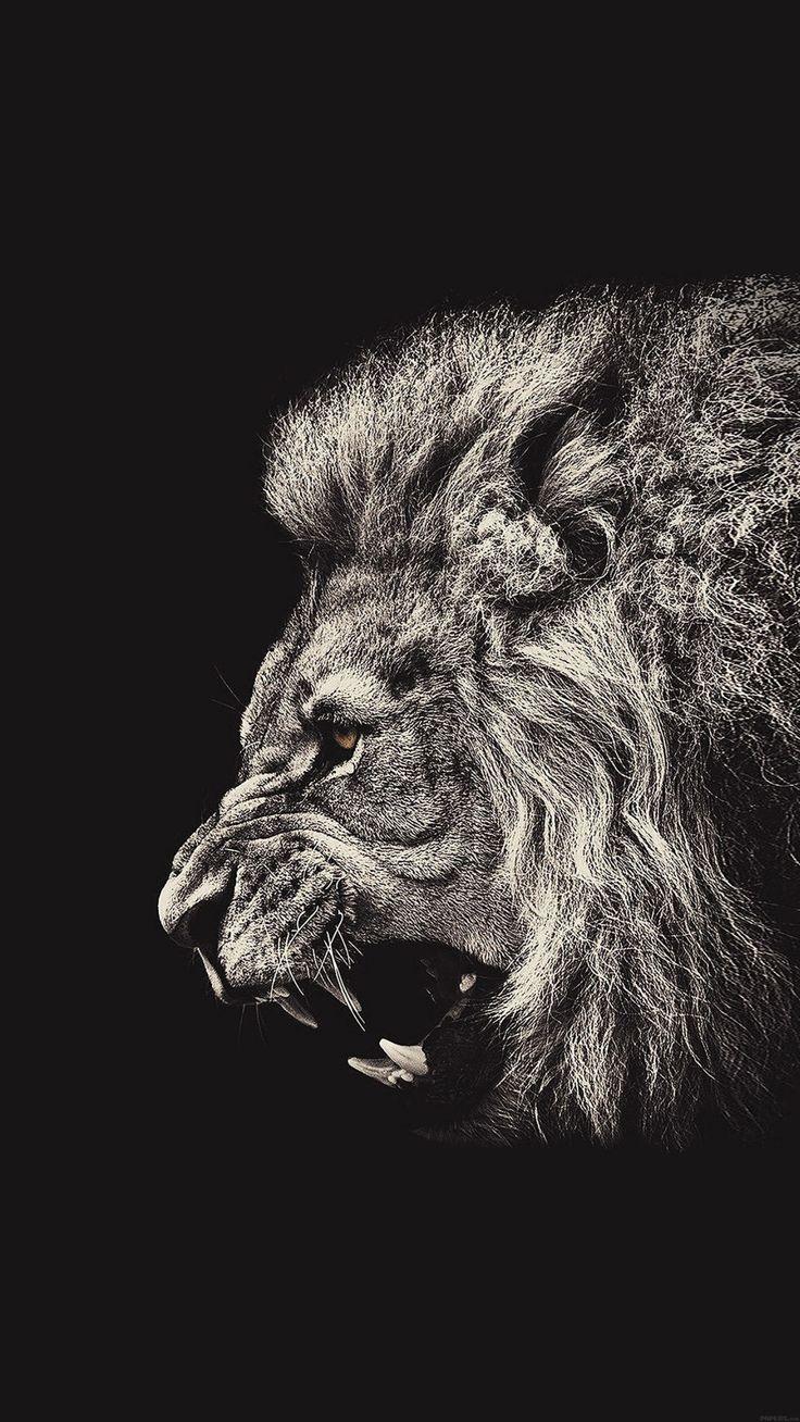 Male Lion Portrait iPhone 6 Plus HD Wallpaper