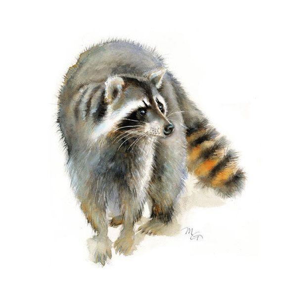 Raccoon watercolor - Raccoon Painting - Art Print - Home ...