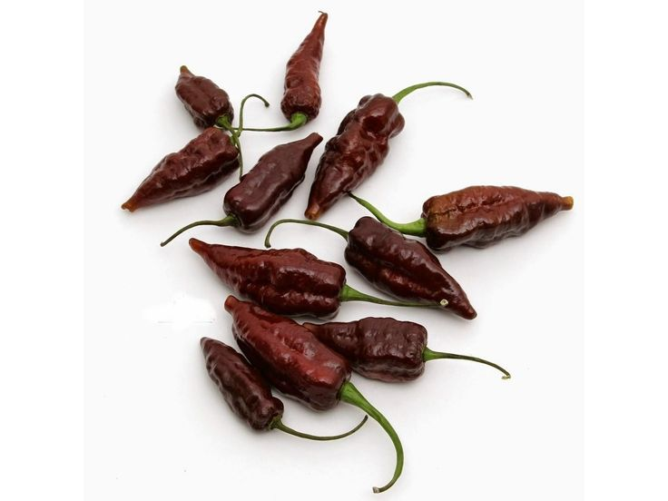 2,50 € Fatalii ChocoChili Seeds Price for Package of 5 seeds. The Fatalii is a chili pepper of Capsicum chinense that originates in central and southern Africa. It is described to have a fruity, citrus flavor with a searing heat that is comparable to the standard habanero. The Scoville Food Institute lists the Fatalii as the sixth hottest pepper with