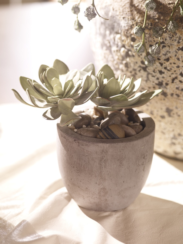 This succulent doesn't need light, water, or any other care—and it will stay as lovely as the day you take it home. (Surprise!)Hens And Chicks, Interiors Design, Well Furnishings In Doors, Flower Arrangements, Flower Power, Flower Gardens, Ethan Allen, Delight Details, Indoor Plants