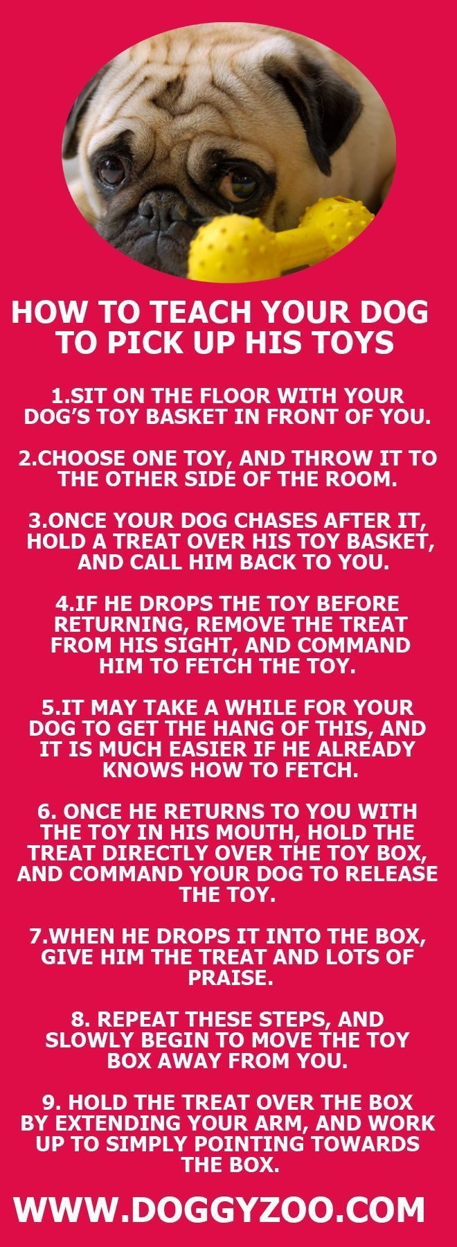 How to teach your dog to pick up his toys   Pug Puppies