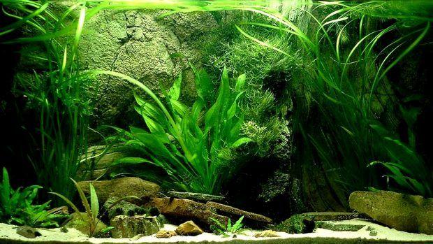 Aquarium Backgrounds Download Free Pixelstalk Net Aquarium Backgrounds Background Pictures Underwater Wallpaper
