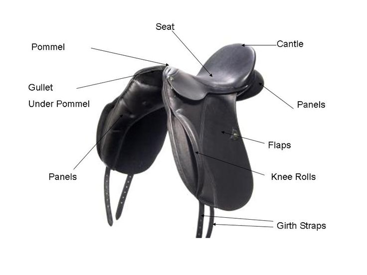 a5baecee7679bd8294a04a3b166a1843 english saddle parts quiz, parts of an english saddle horse girl