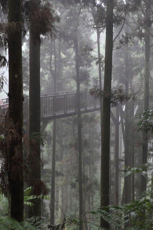 bluepueblo:    Forest Skywalk, Taiwan  photo via michelle