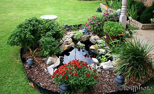 goldfish-pond | Front yard water feature | Terence Young | Flickr