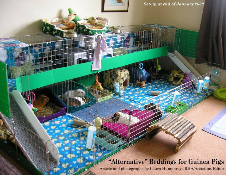 Creative guinea pig cage ideas creative cavy and guinea for Discount guinea pig supplies