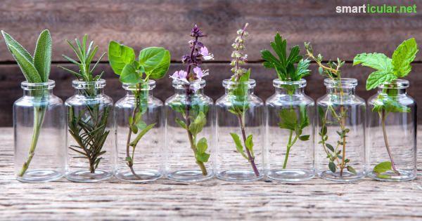 Gegen fast jede Krankheit ist ein Kraut gewachsen! Mit einem eigenen Apotheker-Beet im Garten oder auf dem Balkon kannst du dir so manche Pille ersparen.