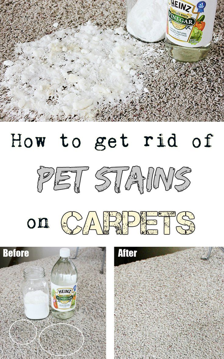 How to remove pet stains on carpets - CleaningTutorials.com