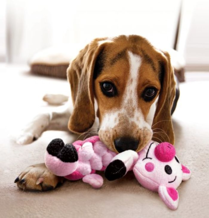 Large Toy Dogs : Best images about durable chew toys for large dogs