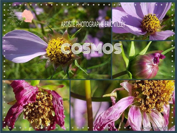 My second book, cosmos by ERIC VILLEY-et-Carine...ARTISTE PHOTOGRAPHE