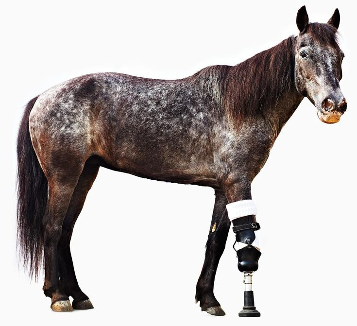 Animal Prosthetics Help Human Amputees Move AgainAnimal Pics, Dogs Horses, Helpers Legs, Animal Stuff, Molly, Human Helpful Animal, Hors Helpers, Animal Prosthetic, Prosthetic Legs