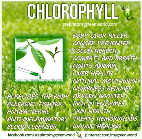 how to get chlorophyll in your diet