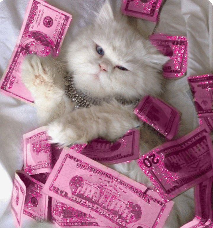 Pin By E Money On Vibes Money Cat Cats Cute Cat