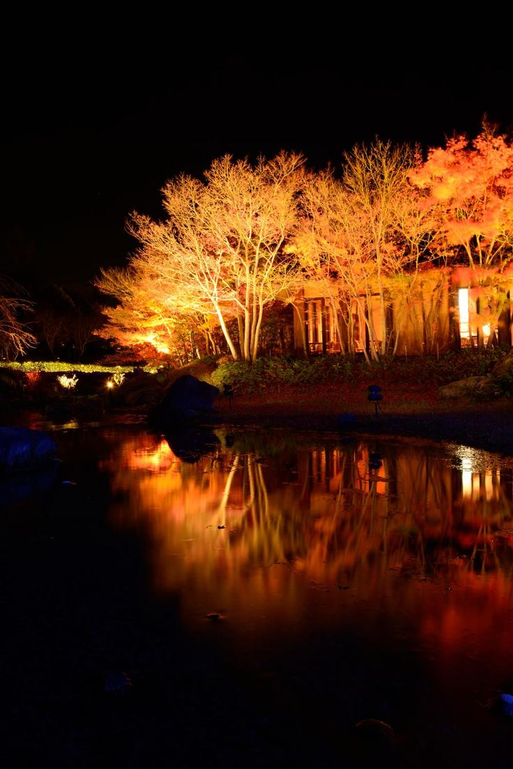 旅行者が選んだ!関西の人気紅葉名所ランキング Top20 | TripAdvisor Gallery