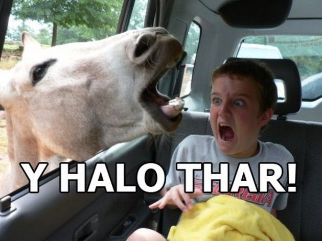 """It says """"Y HALO THAR!"""", and it should say """"Why hello there!"""". The punctuation was fine, but there were numerous spelling errors."""