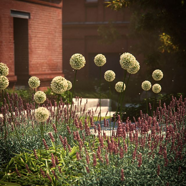 Garden2 by BBB3viz, via Flickr