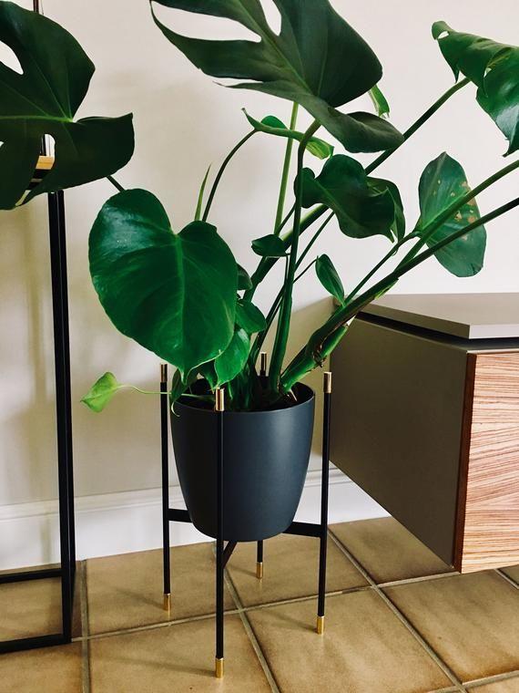 Tolle Wohnzimmer Pflanze mit #Blumenständer - Blumenhalter