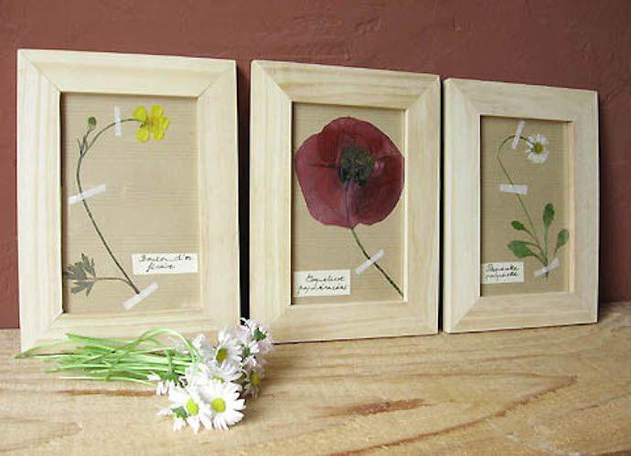 monta tu propio herbario tuteate sitio de manunalidades http://www.tuteate.com/
