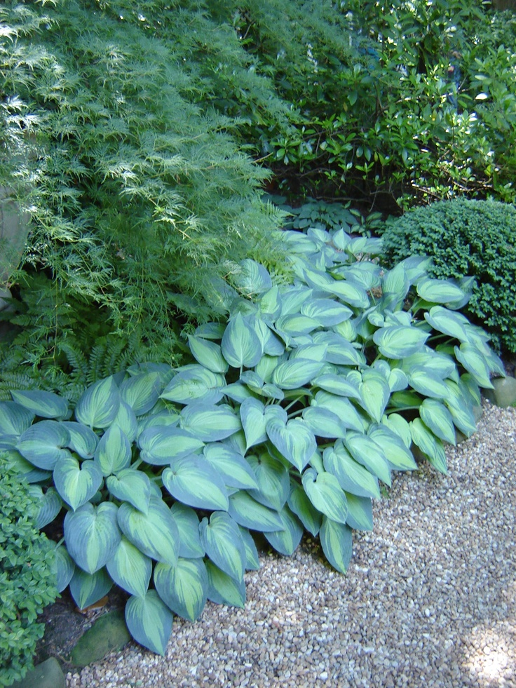 Shade Garden Along A Pea Gravel Path With A Mass Of June