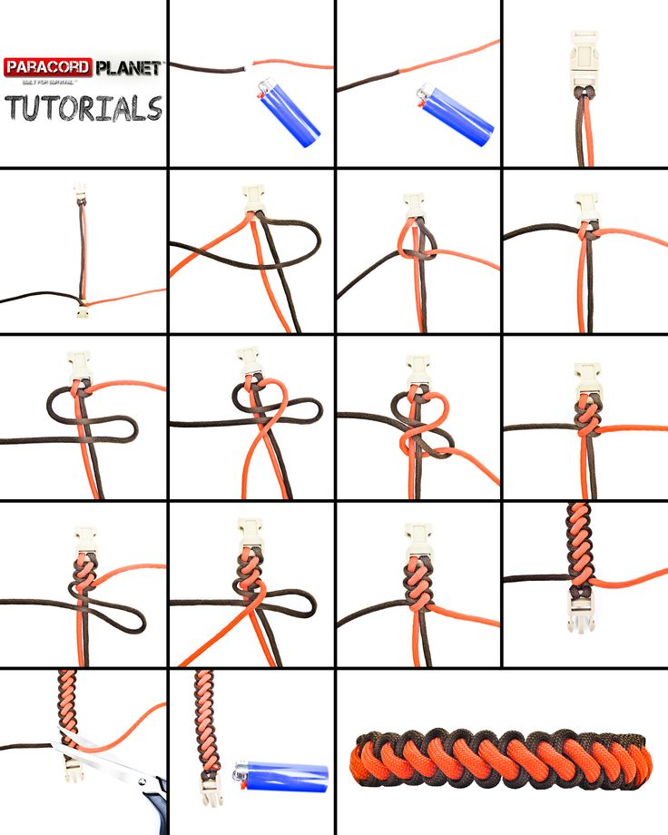 big curling millipede picture tutorial