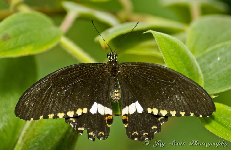 Batterfly by Jay Scott, via 500px