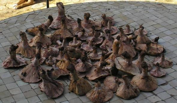 the mushroom harvest