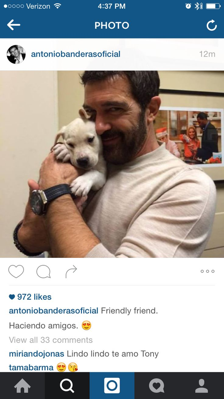 ʕ•́ᴥ•̀ʔ ❤️ ʕ•́ᴥ•̀ʔ Awwww ANTONIO & a Cute Puppy!!..Is that puppy for me??..That's so Adorable!!..I can't stand it!!!..Que LINDO EL Perrito!!!...The Doggy will stay warm in his Bushy BEARD!!!..I wish I was that puppy (Spanish: Quiero ser ese Perrito) PS: I want a Puppy and you dressed up like ZORRO for Christmas!!!...Hahahaha!..  (✿◠‿◠) Muchos Besitos y Abrazos, JULIA #AntonioBanderas #The33 #PuppyLove #Saturdays