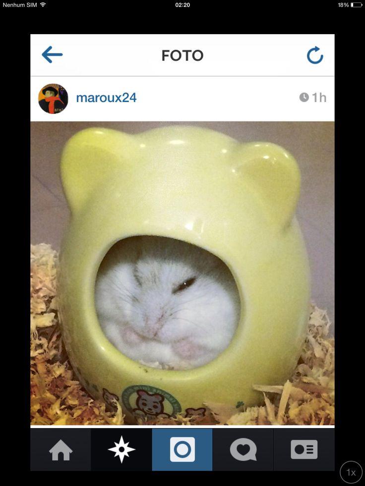 Mejores 115 imágenes de Things en Pinterest | Cosas al azar ...