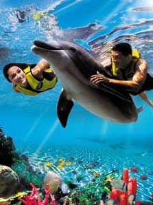 Swim with dolphins. - Dolphin Lagoon in Orlando, FL