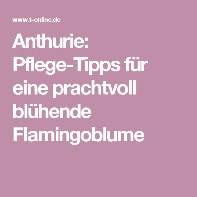 Anthurie: Pflege-Tipps für eine prachtvoll blühende Flamingoblume