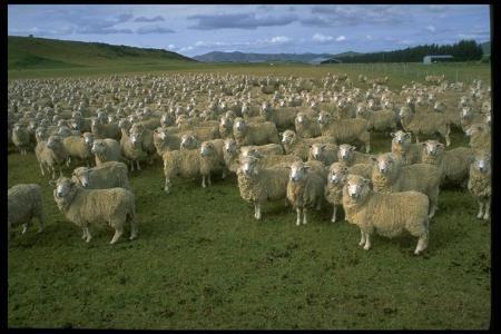 Quand Candide et Cacambo a parti du Eldorado, le roi les a donné cent moutons qui portaient beaucoup de trésors du pays pour le voyage (24)