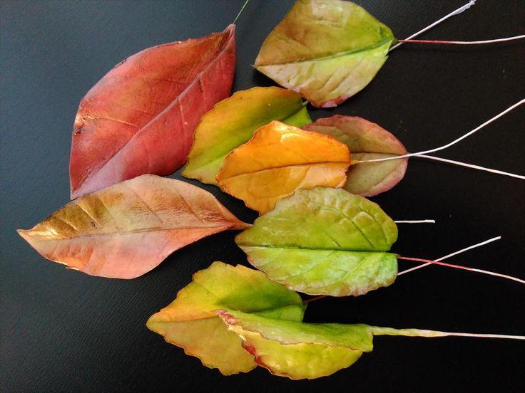 Buenos días, hoy Sonia de la Cuadra te enseña a hacer hojas con fondant muy naturales. Este tutorial te servirá para cualquier tipo de hoja.  http://www.fondant-cupcakes.com/todo-fondant-flores/2015/12/08/paso_paso_como_hacer_hojas_otonales_fondant_muy_naturales http://tienda.fondant-cupakes.com