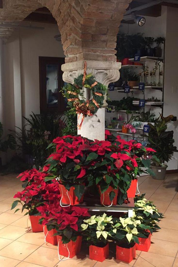Il Natale è arrivato nei negozi Fiorito! Scopri il negozio più vicino a te: www.fiorito.net #fiorito #negoziodifiori #fiori #stelledinatale #Natale #composizionifloreali