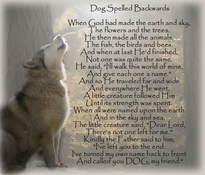 So God Made A Dog Poem | Dog Poems | Dog...God spelled ...