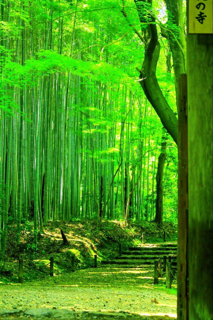 Kyoto #Green