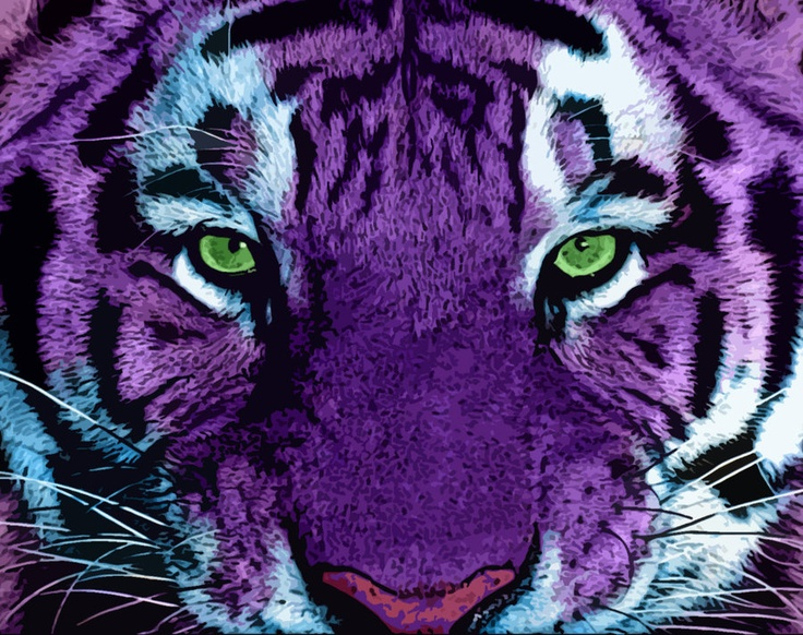 This is Veras tiger Midnight this is a viscous tiger if rubbed the wrong way