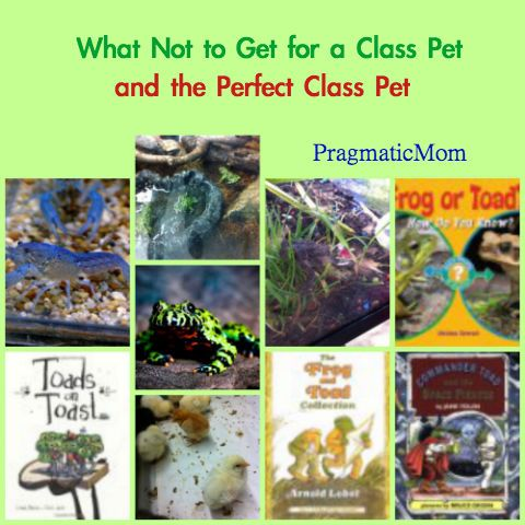 What Not to Get for a Class Pet :: PragmaticMom