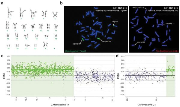 Recurrent copy number variations in human induced pluripotent stem cells