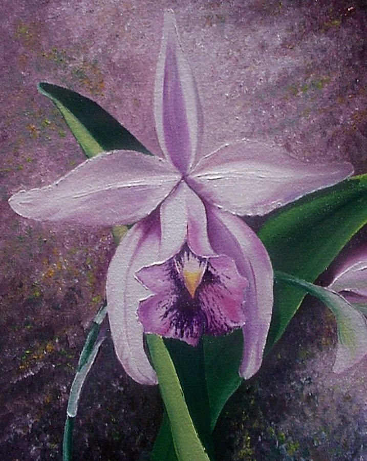 Orchid Lalia By Karin Dawn Kelshall Best