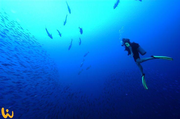 Unter Wasser ist man in einer anderen Welt #oceanlover #born2dive #meer #wirodive #robertwilpernig #touchedbynature #sommer #sonne #costarica – Wirodive