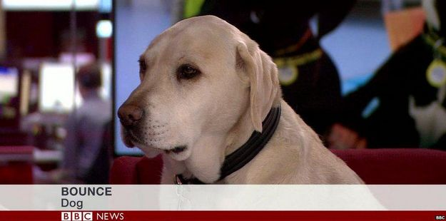 When this guest appeared on BBC News.   The 35 Most WTF Moments Of 2015 So Far
