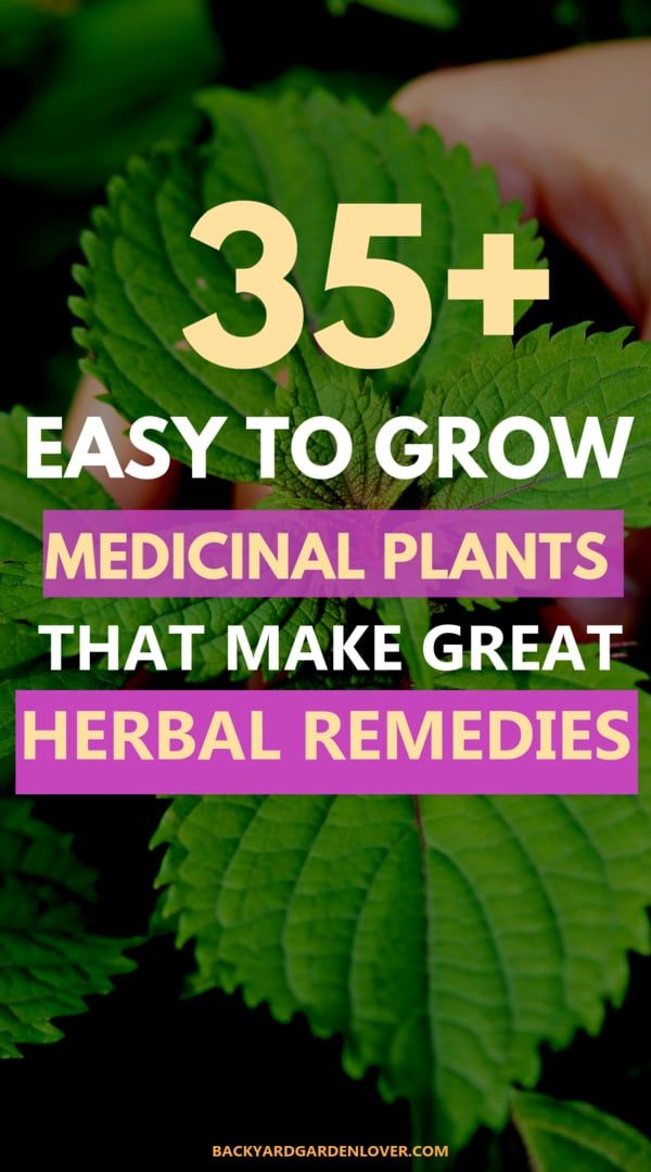 35 Easy To Grow Medicinal Plants To Make Your Own Herbal Remedies