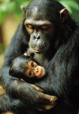 Maternidade na savana: Registros de filhotes e mães em cenários africanos - Por dentro da África