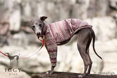 Forklore / Lavender in IGGYplus italian greyhound clothes