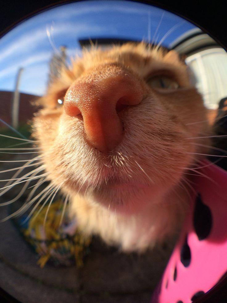Daphne the cat